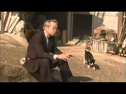 Des chats se suicident en masse et révèlent un scandale #écologie #Histoire