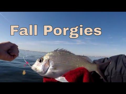 NJ Fall Bottom Fishing - Porgies (Scup), Big Dogfish, And More