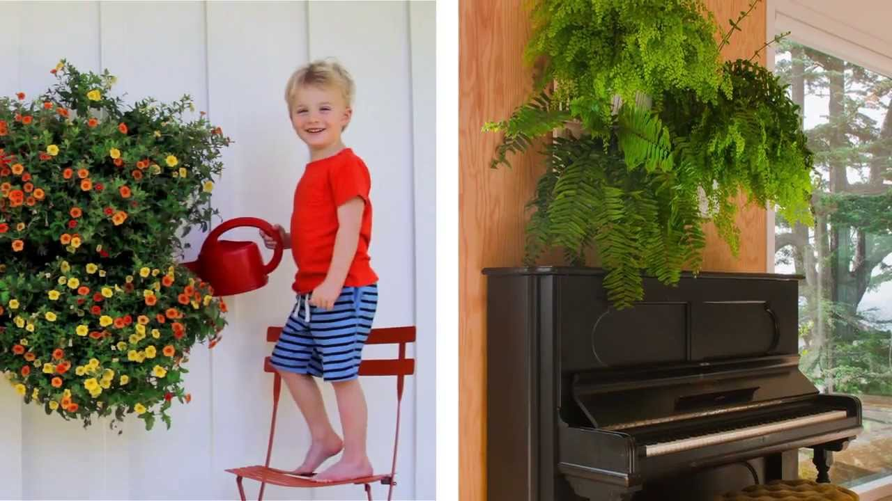 Woolly Pocket Living Wall Planter   YouTube