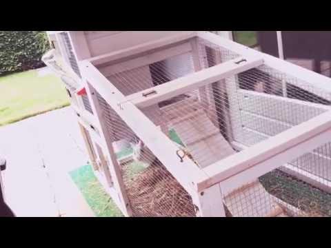 Huis van Puck het konijn
