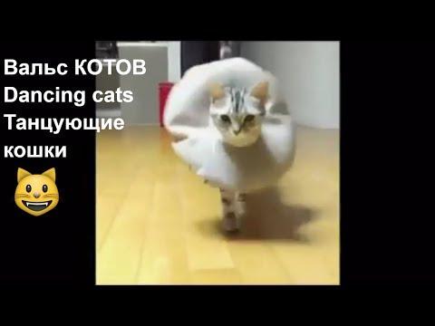 Танцующие Кошки. Вальс Котов/Dancing cats