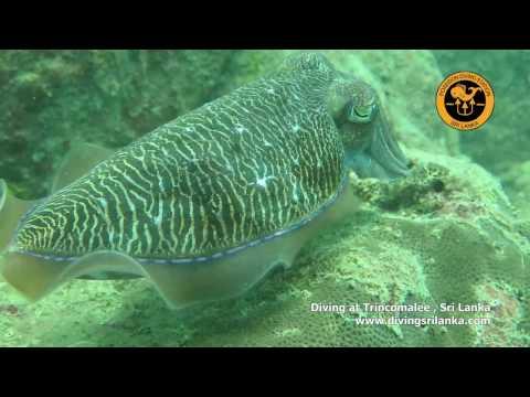 Poseidon Diving Station Trincomalee