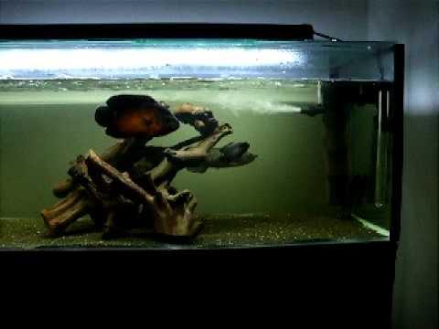 Saratoga/oscar tank