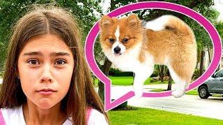 Nastya perdió un video de cachorros para niños
