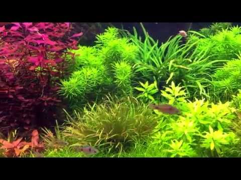 Planted tank - Holland akvárium