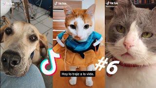 LOS MEJORES TIK TOKS DE GATOS Y PERROS #6  Recopilación de Tik Toks de animales