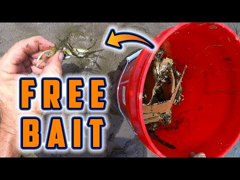 Quick & Easy Way To Catch Menhaden (For Grouper, Cobia, Redfish, Tarpon & More) from YouTube · Duration:  3 minutes 7 seconds