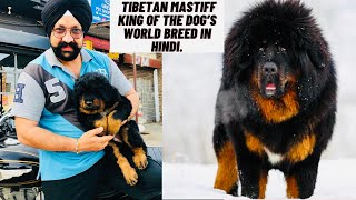 Information about Tibetan Mastiff king of the dog's world breed in Hindi.