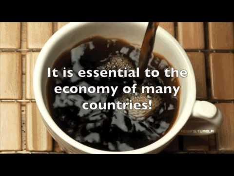 Fair Trade Coffee-AP Human Geo
