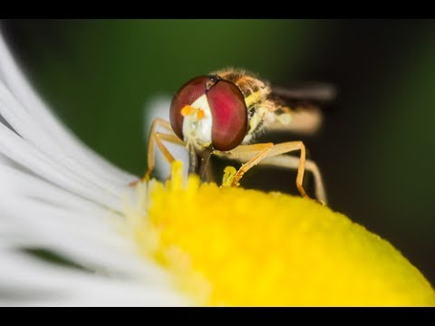 How to Shoot Amazing Macro Insects with Flash