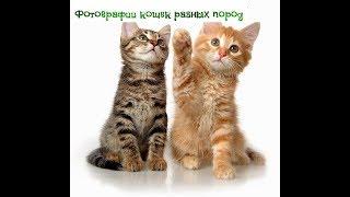 Фотографии кошек разных пород