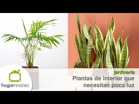 Plantas de interior sin luz natural plantas para el bao - Plantas de interior sin luz ...