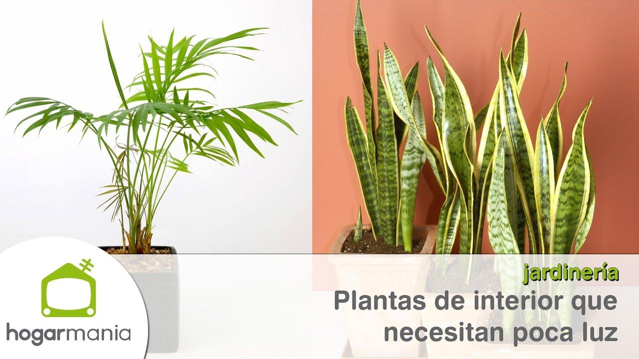 Plantas De Interior Que Resisten Con Poca Luz Youtube