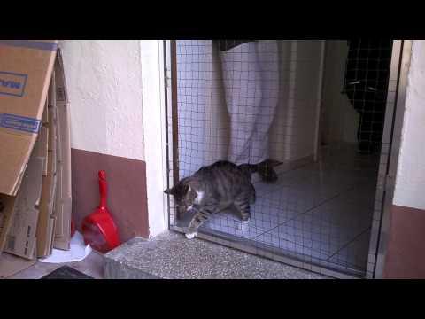 Katzennetz System im extremen Praxistest