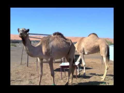 Fotos viagem a Muscat - Oman
