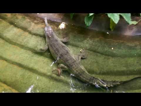 Crocodile zoo berlin !!! GERMANY!!!!