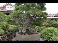 【ぬるぬる動画】盆栽村 Bonsai Mura