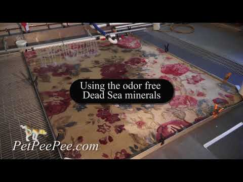 Carpet & Rug Cleaning from urine odor-#petpeepee