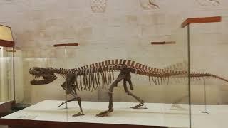 Палеонтологический музей в Москве. Экскурсия по музею.