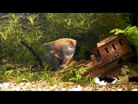 Аквариум Jebo R210 и его обитатели, две недели после запуска аквариума