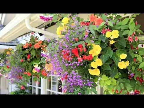 How to create a perfect hanging basket for flowering plants || moss rose hanging basket