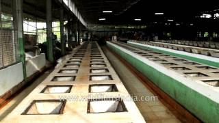 Tea producing factory in Assam