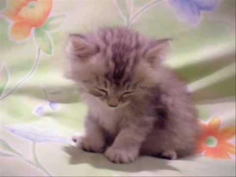قط   لا يقاوم   النوم   =cat=
