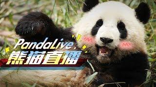 iPanda live stream on Youtube.com