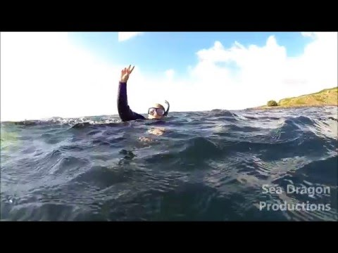 The best surface interval EVER! Snorkeling with Manta Rays at Cook Island