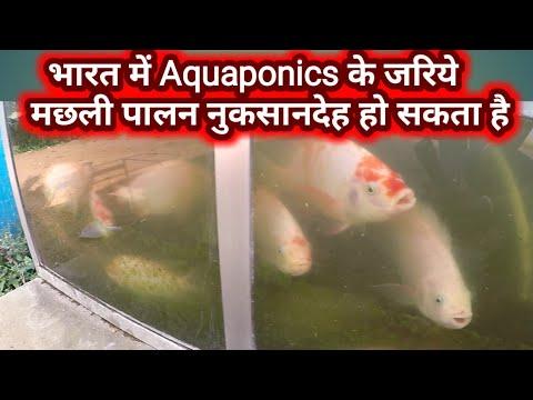 भारत में  Aquaponic के जरिये मछलीपालन फायदेमंद नही है.