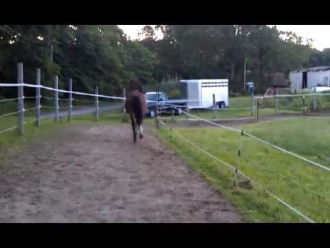 OMG FOOD!!!!!!! 30 year old horse runs to the barn for breakfast