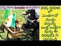 DOG SHOW IN IRELAND || ALL BREEDS OF DOGS FOR PET LOVERS || PET DOGS GUARD DOGS & SHEEP DOGS