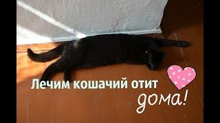 Лечим отит у кошек в домашних условиях!