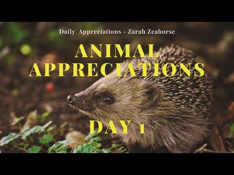 day-1---hedgehogs---animal-appreciations---zarah-zeahorse