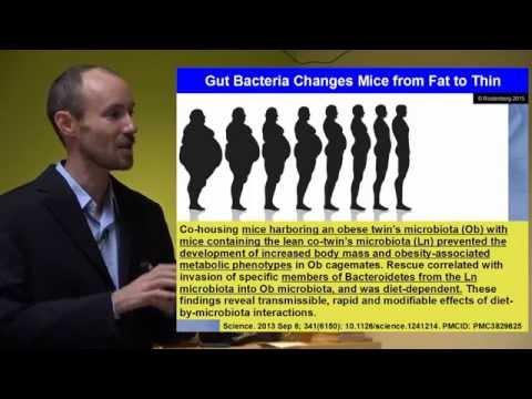 Leaky Gut, Leaky Brain: How Gut Problems Create Brain Problems