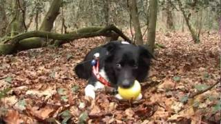 Dorset Police Work With Local Charity Dorset Search Dogs