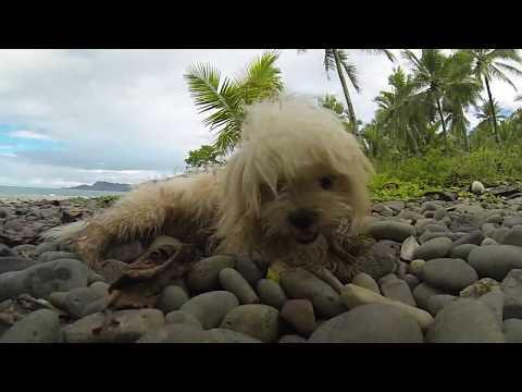 Filipinas 2016 Lanuza and Siargao Island