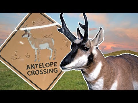 Hunting Pronghorn Antelope in Wyoming - Means More Than You