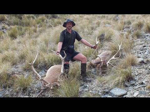 CHASING STRIPPERS - RED STAG HUNTING