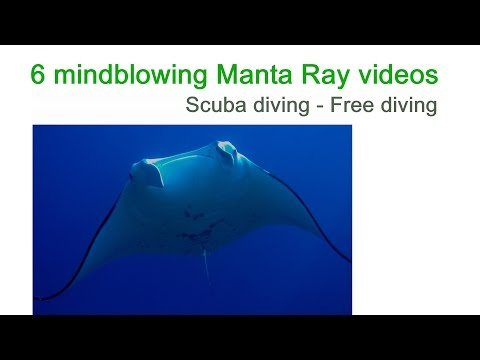 6 mindblowing Manta Ray videos - Scuba + free diving, ocean, adventure, reef, animals, compilation