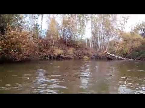 Река рыбная, бобры атаковали