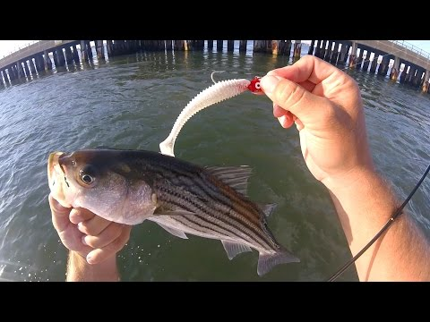 Rt. 50 Rockfishing Tips - May 18 2017 - Fishing Ocean City, Maryland