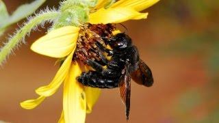 Пчеловодство для начинающих. Простые советы