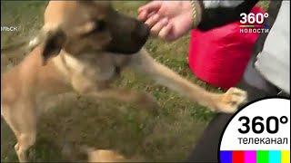 В Подольске открылся центр временно бездомных домашних животных