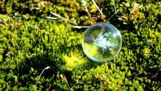 Glass Ball on Moss - Horizontal - Free Photos And Art