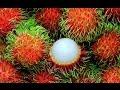 The Super Fruit: Rambutan