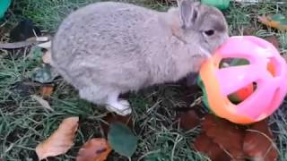 Bunch of Bunnies Failing Compilation