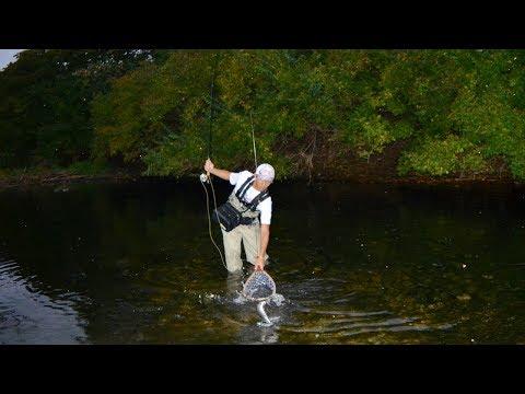 Illinois Fly Fishing Rainbow Trout Fall 2017