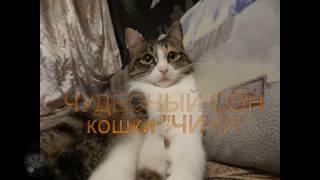 ЧУДЕСНЫЙ СОН кошки ЧИЧИ, Вологда,Грязовец, музыка А.Матис