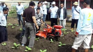 YANMAR Cultivator-Tembakau Jember.MOV